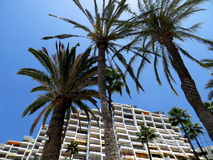 Gran Canaria, Hotel und Palmen Stockfotografie