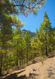 Gran Canaria, inland Royalty Free Stock Images