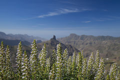 Gran Canaria, Kesselde Tejeda im Januar Stockbild
