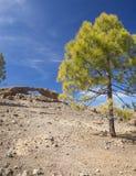 Gran Canaria, Las Cumbres - самые высокие области острова Стоковая Фотография