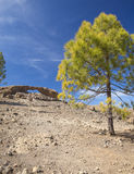 Gran Canaria, Las Cumbres - the highest areas of the island. Eroded stone arch La Ventana del Nublo, canarian pine trees Stock Photography