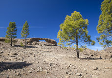 Gran Canaria, Las Cumbres - the highest areas of the island. Eroded stone arch La Ventana del Nublo, canarian pine trees Royalty Free Stock Photos