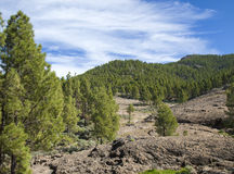Gran Canaria, Las Cumbres - the highest areas of the island. Views from hiking path Llanos de la Pez - Tunte Stock Image