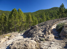 Gran Canaria, Las Cumbres - the highest areas of the island Royalty Free Stock Photo