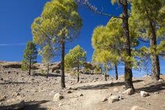 Gran Canaria, Las Cumbres - las áreas más altas de la isla Imagenes de archivo