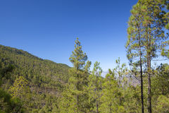 Gran Canaria, Lipiec, Tamadaba Zdjęcia Stock