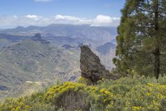 Gran Canaria, Mai Stockfoto