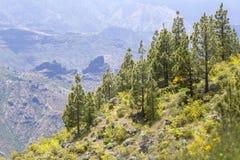 Gran Canaria, Mei royalty-vrije stock foto