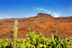 Gran Canaria Mogan cactus and red mountain Royalty Free Stock Photography