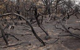 Gran Canaria po pożaru lasu zdjęcia stock