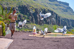GRAN CANARIA, SPAIN - MARCH 10 2017 - Birds of pray show at Palmitos Park Maspalomas, Gran Canaria, Spain Royalty Free Stock Image