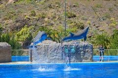 GRAN CANARIA, SPAIN - MARCH 10 2017 - Dolphins show at Palmitos Park in Maspalomas, Gran Canaria, Spain stock image