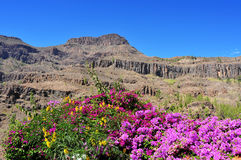 Gran Canaria, Spain. View of the volcanic landscape in Fataga, Gran Canaria, Spain stock photo