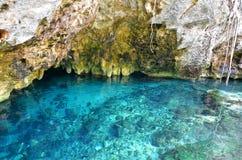 Gran Cenote, Mexico Arkivbilder