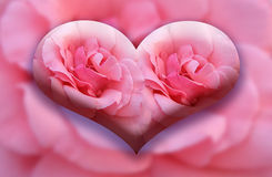 Gran corazón de las dos rosas Foto de archivo
