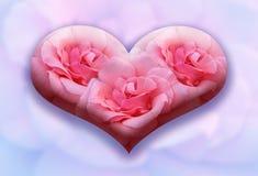 Gran corazón de las tres rosas Imagen de archivo libre de regalías
