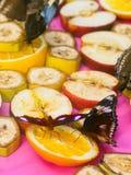 Gran Eggfly Hipolimnas Bolina Imagenes de archivo