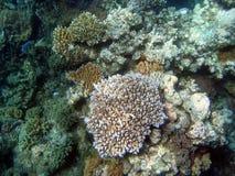 Gran filón de barrera, subacuático Imagen de archivo