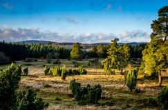 Gran Forest Landscape Fotos de archivo libres de regalías
