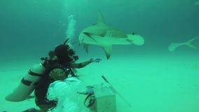 Gran grupo de ataque de los pescados del martillo de buceadores subacuáticos Fauna del océano snorkeling metrajes