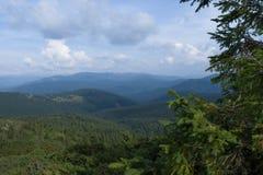 Gran i de Carpathians bergen Royaltyfria Foton