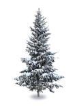 Gran i snön Arkivfoto