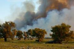 Gran incendio in aperta campagna Fotografia Stock