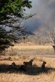 Gran incendio in aperta campagna di Kruger Fotografia Stock