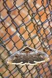 Gran mariposa en una rejilla del metal Cierre para arriba Foto de archivo
