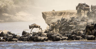 Gran migración fotografía de archivo