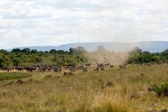 Gran migración con el ciclón en Masai Mara National Park Foto de archivo