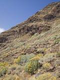 Gran occidental Canaria, mayo Imágenes de archivo libres de regalías