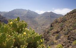 Gran occidental Canaria, mayo Imagen de archivo libre de regalías