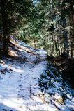 Gran- och lärkskog i vinter, snöig slinga som strilas med snö Arkivfoto