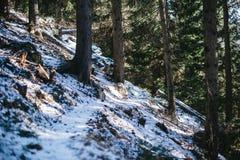 Gran- och lärkskog i vinter, snöig slinga som strilas med snö Royaltyfria Foton