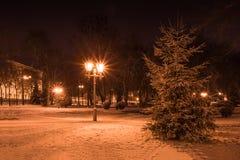 Gran och lykta i parkera på natten i vinter Royaltyfria Bilder