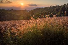 Gran paisaje de NaN, en el norte de Tailandia Foto de archivo libre de regalías