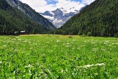 Free Gran Paradiso, Italy Royalty Free Stock Photo - 60062205