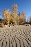 Gran parque nacional de las dunas de arena Fotografía de archivo
