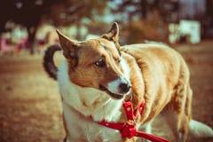 Gran perro possing en parque imagen de archivo