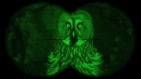 Gran prismáticos a través vistos de Grey Owl Strix nebulosa A través vistos prismáticos con la visión nocturna Observación de páj