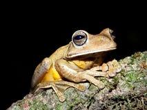 Gran rana en la noche imagenes de archivo