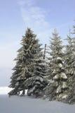 gran sörjer snöig trees Arkivbilder