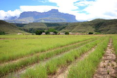 Gran Sabana, Venezuela. Kavac village - the starting point for excursions to Auyantepui Royalty Free Stock Photos