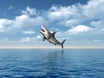 Gran salto del tiburón blanco Imágenes de archivo libres de regalías