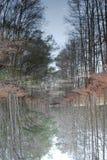 Gran santuario del pantano Foto de archivo