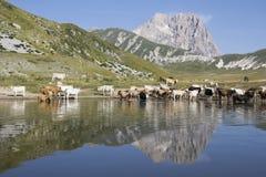 Gran Sasso, Abruzzo - Italien Royaltyfria Bilder