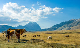 The  Gran Sasso National Park Royalty Free Stock Photo