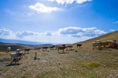 The  Gran Sasso National Park Royalty Free Stock Photography