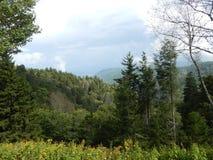 Gran Smokey Mountains de desatención Foto de archivo libre de regalías